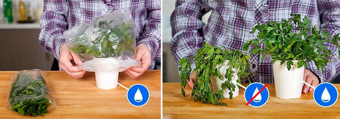 Как да съхраним свеж магданоза и копъра по-дълго