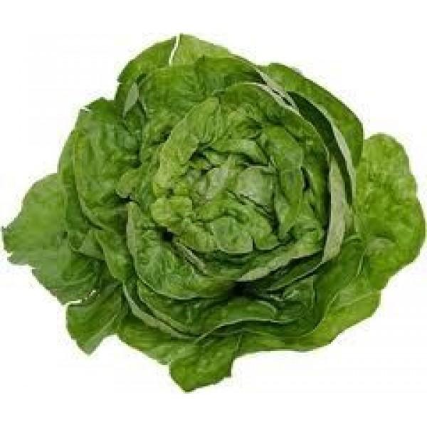 Маруля - Зелена салата
